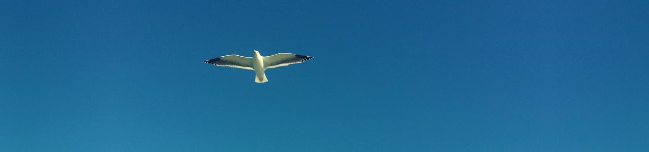 aroma_image_bird
